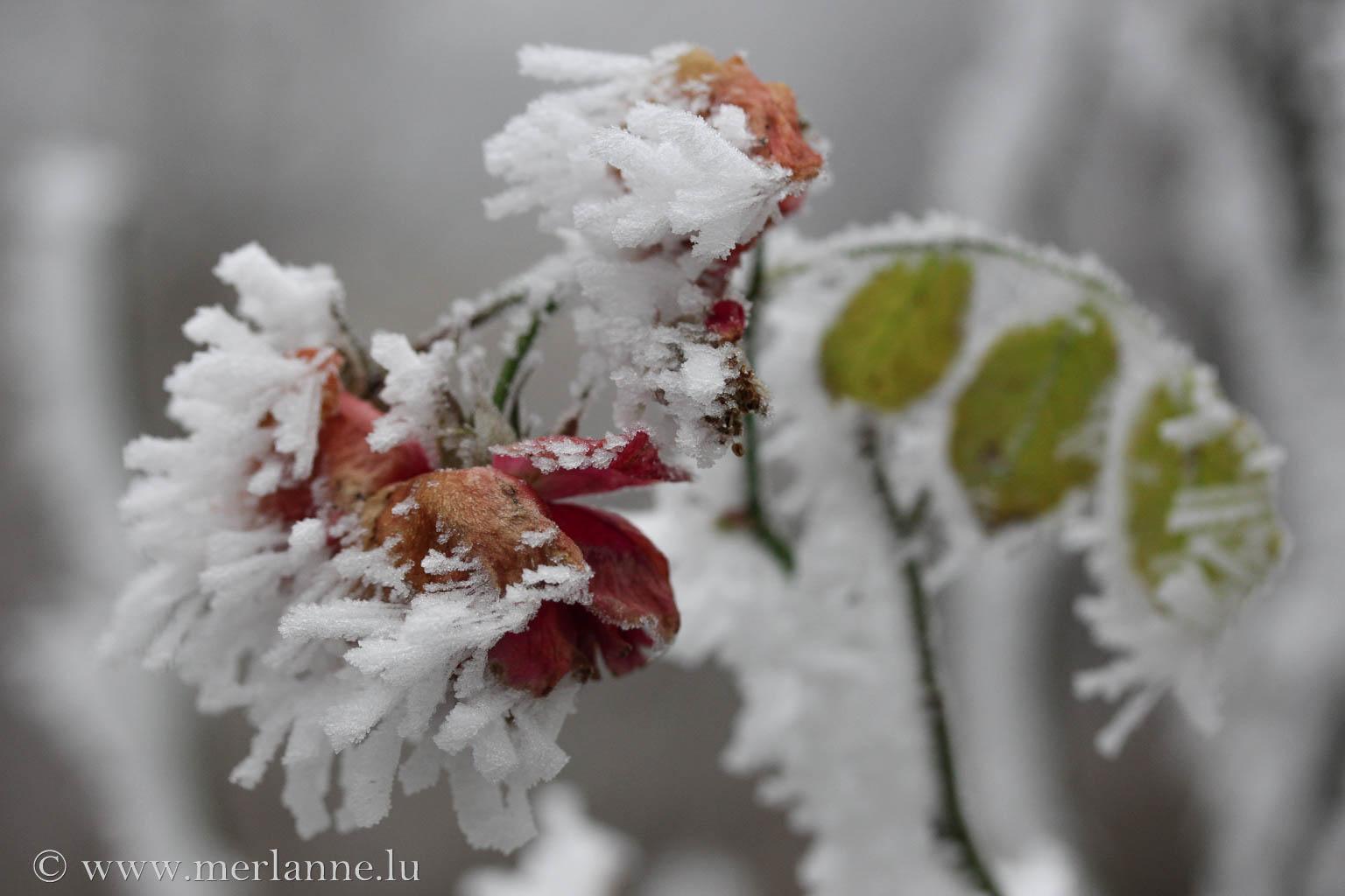 Macro_Winter